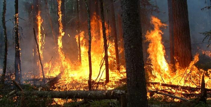 Αγνοήθηκαν οι προτάσεις της ΟΚΕ για τις δασικές πυρκαγιές